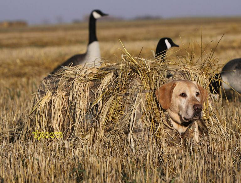 Avery Ground Force Dog Blind MOSSY Camo Waterfowl
